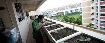 5 tips to help you start a mini farm in your hdb flat home