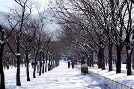 fall and winter in korea skycab travel inc