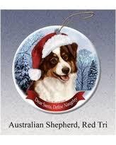 amazing deal on australian shepherd merle howliday