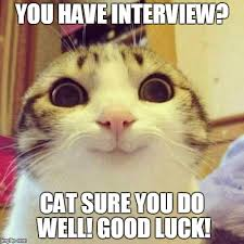 Funny Good Luck Memes - good luck cat meme 100 images 25 best memes about good luck cat