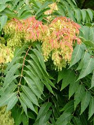 native brazilian plants top 12 invasive trees found in gardens life is a garden