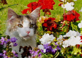 Poisonous Garden Flowers by Plants Poisonous To Dogs U0026 Cats Top 15 Most Common Install It