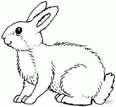 rabbit color pages aecost net aecost net