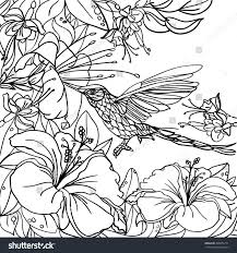 coloring pages tropical birds flowers leaves stock vector