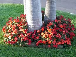 Summer Flower Garden Ideas - 61 best vinca flowers images on pinterest flower gardening