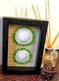 Where To Buy Sand Dollars Sea Urchins Natural Sea Urchins Framed In Large Shadow Box