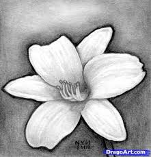 how to draw a realistic flower artwork pinterest drawing