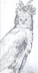 11 best harpy eagle images on pinterest harpy eagle eagles and