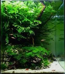 Aquarium Aquascaping Aquascapes The Art Of Creating Delicate Underwater Gardens