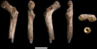 new fossil remains of homo naledi from the lesedi chamber south