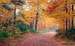 autumn wonderland england fall foliage guy biechele