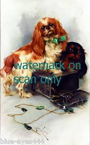 6 cavalier king charles spaniel note greeting cards 11 99