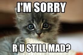 You Still Mad Meme - i m sorry r u still mad cute kittens meme generator