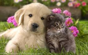 puppies and kittens cute backgrounds on of high with wallpaper hd