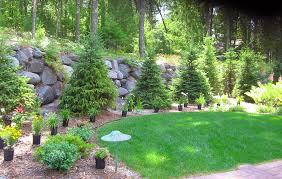 Bushes For Landscaping Trees Shrubs Custom Landscaping