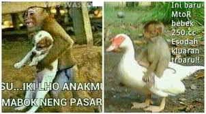 Meme Bebek - 25 meme kelakuan lucu monyet yang bikin ketawa ngakak