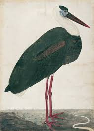 Black Stork in a Landscape
