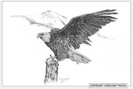 fireflight photo pen and ink drawings