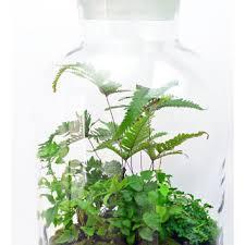live moss terrarium little people from pinkserissa on etsy