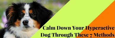 hyperactive dogs calm down your hyperactive dog through these 7 methods dog