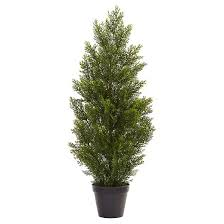 mini cedar pine tree indoor outdoor green 3 target