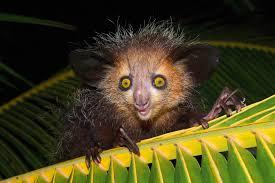 evolution ftw the weird stuff animals do to survive wired