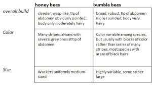 difference honey bees bumble bees