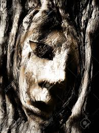 face in tree bark stock photo picture and royalty free image