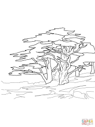 tulip tree or tulip poplar coloring page free printable coloring
