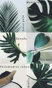 Indoor Home Decor Best 10 Indoor Plant Decor Ideas On Pinterest Plant Decor