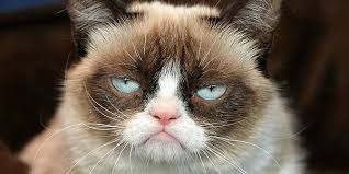 Original Grumpy Cat Meme - here s who is playing grumpy cat because of course cinemablend