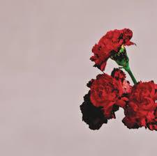 Lay Me Down On A Bed Of Roses Lyrics John Legend U2013 Bridge Over Troubled Water Live Lyrics Genius Lyrics