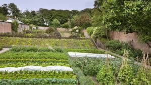 victorian garden walls our top kitchen gardens national trust