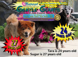american eskimo dog rescue indiana gentle giants rescue and adoptions