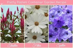 container flower gardening u0026 choosing plants for container gardening