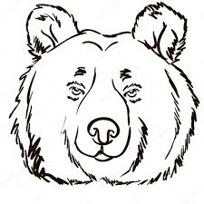 bear face hand drawn vector illustration u2014 stock vector