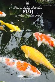 How To Build A Fish Pond In Your Backyard How To Add Fish To A Backyard Garden Pond Empress Of Dirt