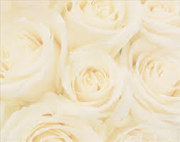 wedding flowers background white roses wedding pictures background weddings