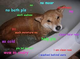 Funniest Doge Meme - the best of the hilarious shibe meme runt of the web doge meme