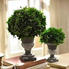 Live Topiary Tree - topiaries artificial trees kirklands
