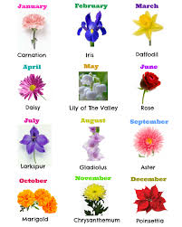 flowers of the month pictures of birth flowers and their names drawing of a room
