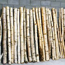 Decorative Birch Poles