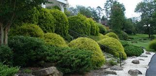 how to plant trees and shrubs on a slope or hillside today u0027s