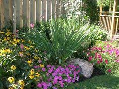 best low maintenance shrubs or flowers for your yard infobarrel