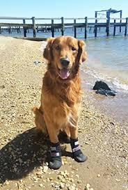 dog and hardwood floors dog paw protectors for hardwood floors amazon com