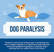Causes Of Sudden Blindness In Dogs Dog Paralysis Common Causes U0026 Treatment Canna Pet