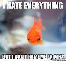 Funny Fish Memes - grumpy fish by david43 meme center