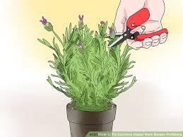 3 ways to fix common indoor herb garden problems wikihow