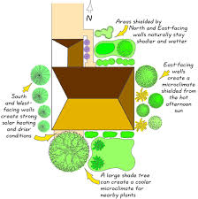 types of native plants permadesign roof reliant landscaping step 3 use low water plants