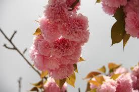 free images tree nature branch petal bloom flora